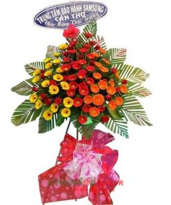 kệ hoa khai trương với hoa Đồng tiền | HKT 9642