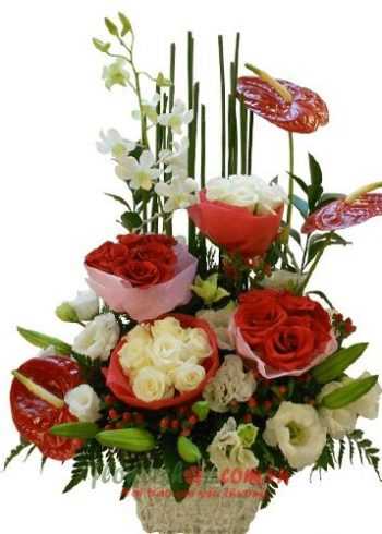 hoa hồng valentine