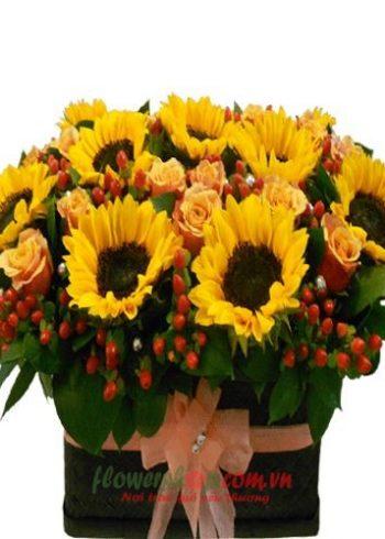 Hoa hướng dương biểu trưng cho năng lượng và sự kiên định