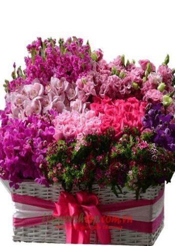 hoa tươi ngày 8-3