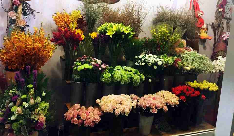 Nhiều loài hoa lạ