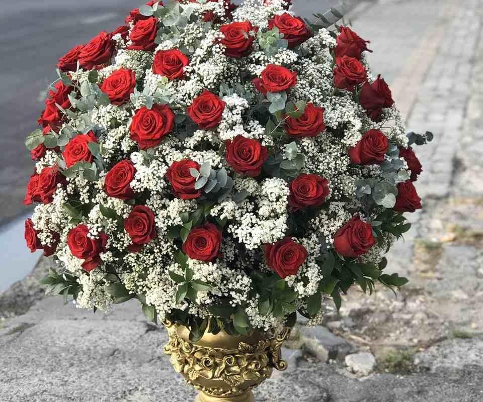 mẫu hoa hồng đỏ sang trọng