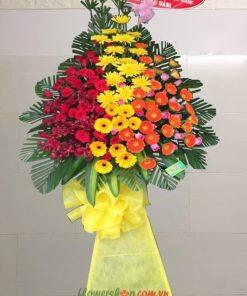 Hoa chúc mừng lan mokara- đồng tiền-hoa hồng