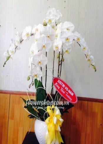 hoa lan hồ điệp 16595