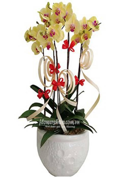 hoa lan hồ điệp 16605