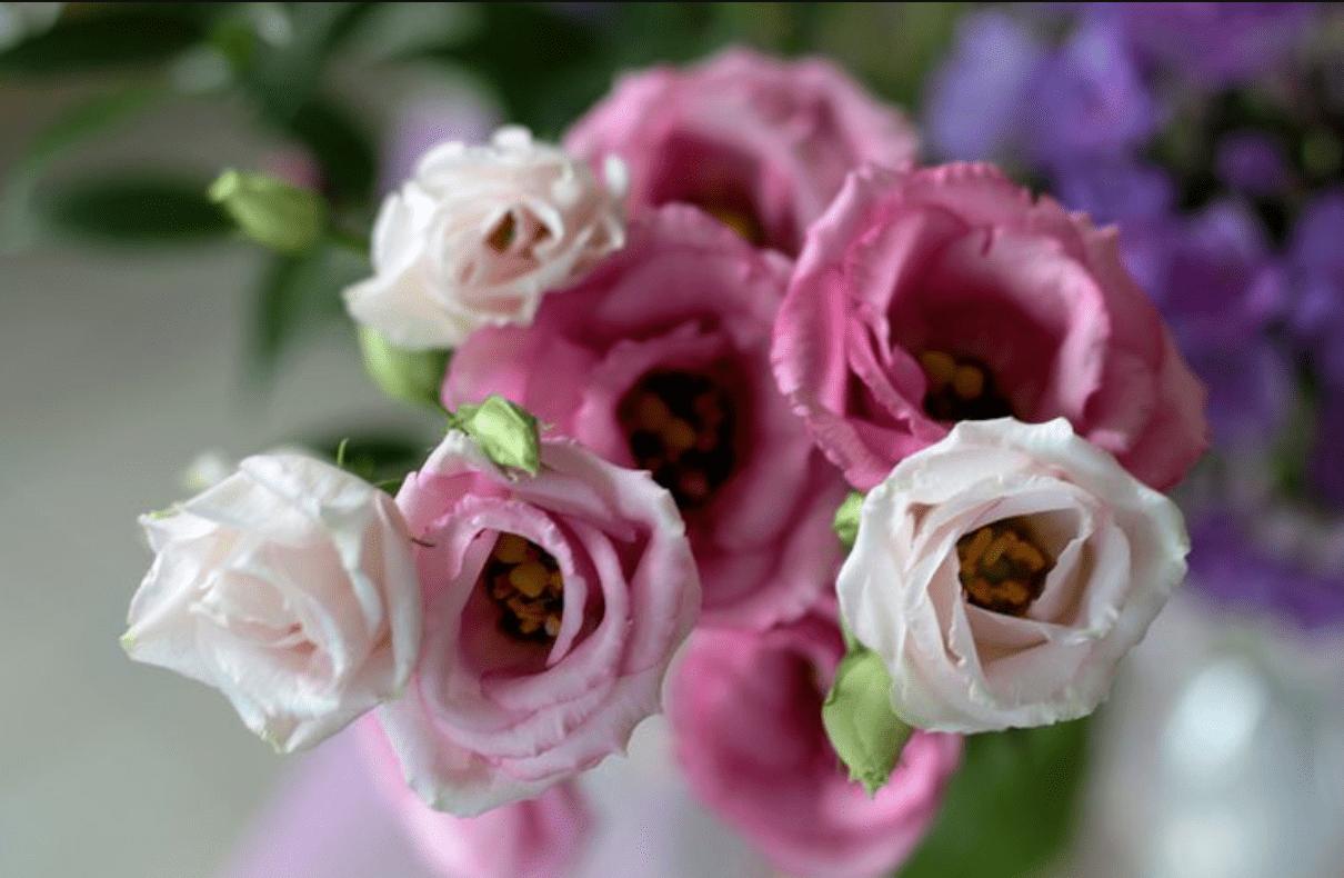 hoa cát tường