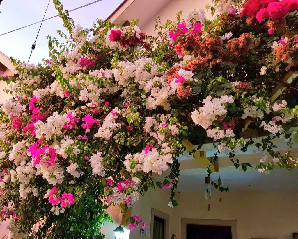 Tìm hiểu vẻ đẹp hoa giấy