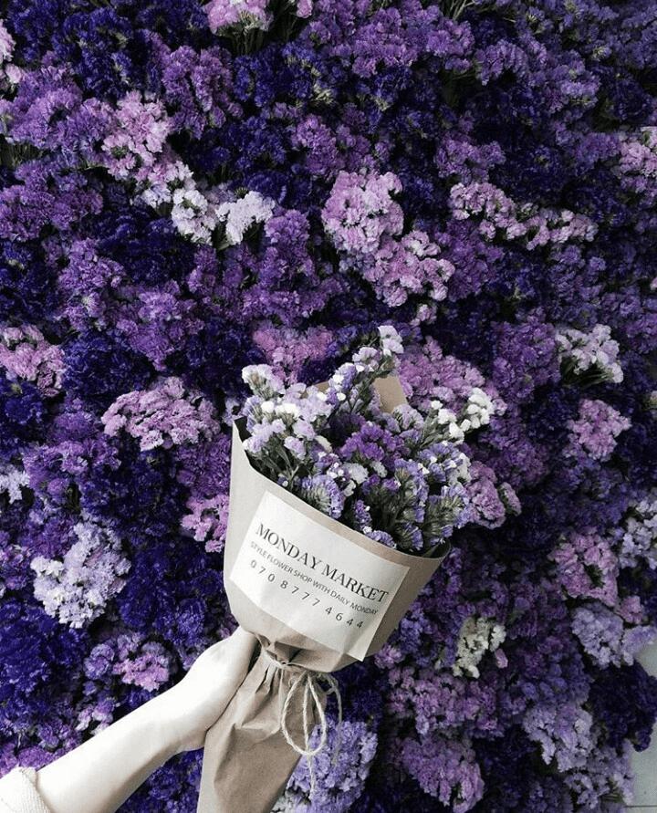 ý nghĩa hoa Salem
