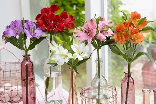 Các loại hoa thủy tiên
