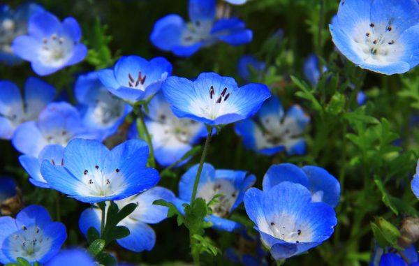 Nét đẹp hoa thủy tiên