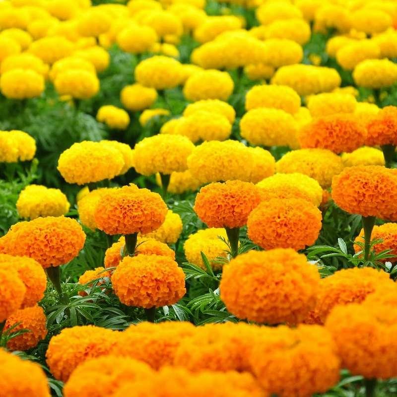 Biểu tượng của hoa