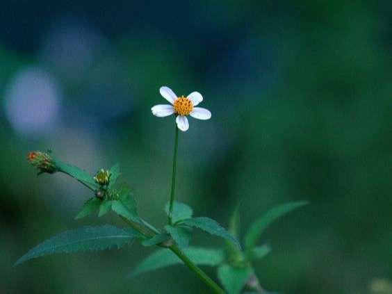 Ý nghĩa hoa xuyến chi
